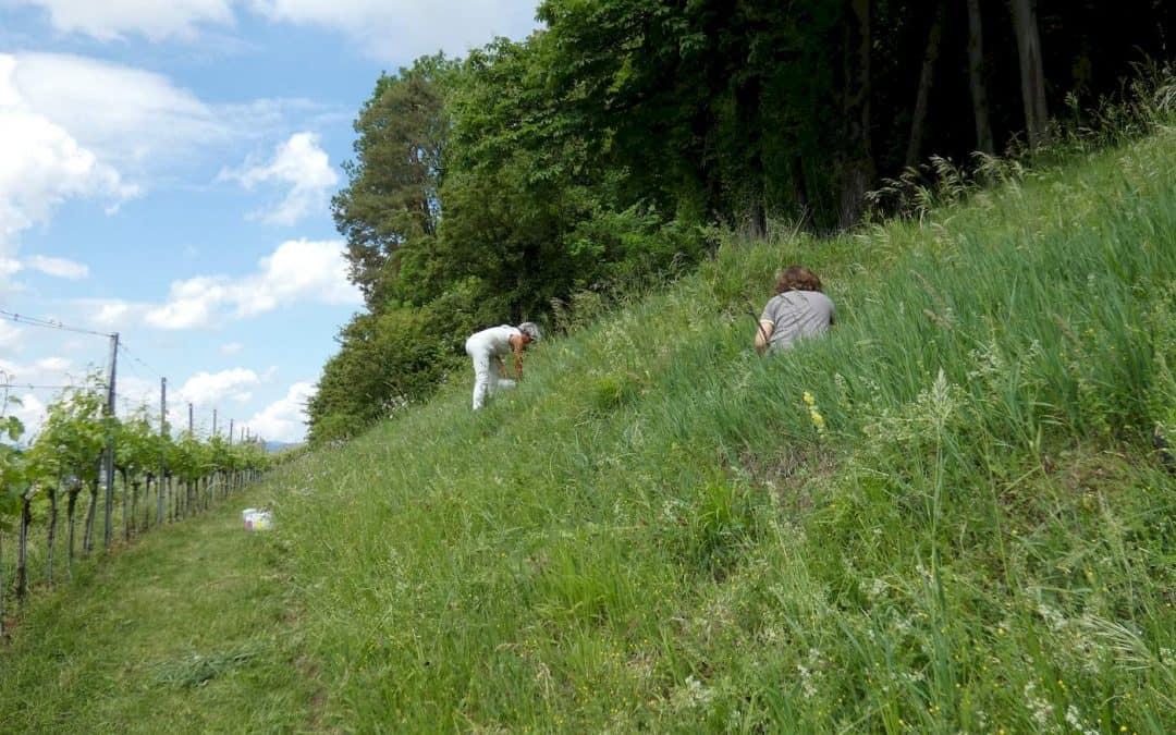 Wiesenaufwertung am Burghölzli-Waldrand