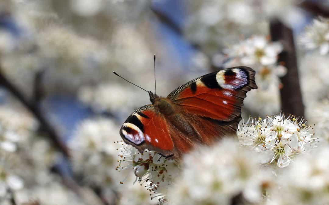 Frühlingserwachen am Burghölzliwaldrand