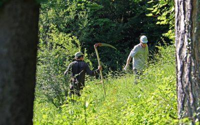Wiesenpflege am Burghölzliwaldrand