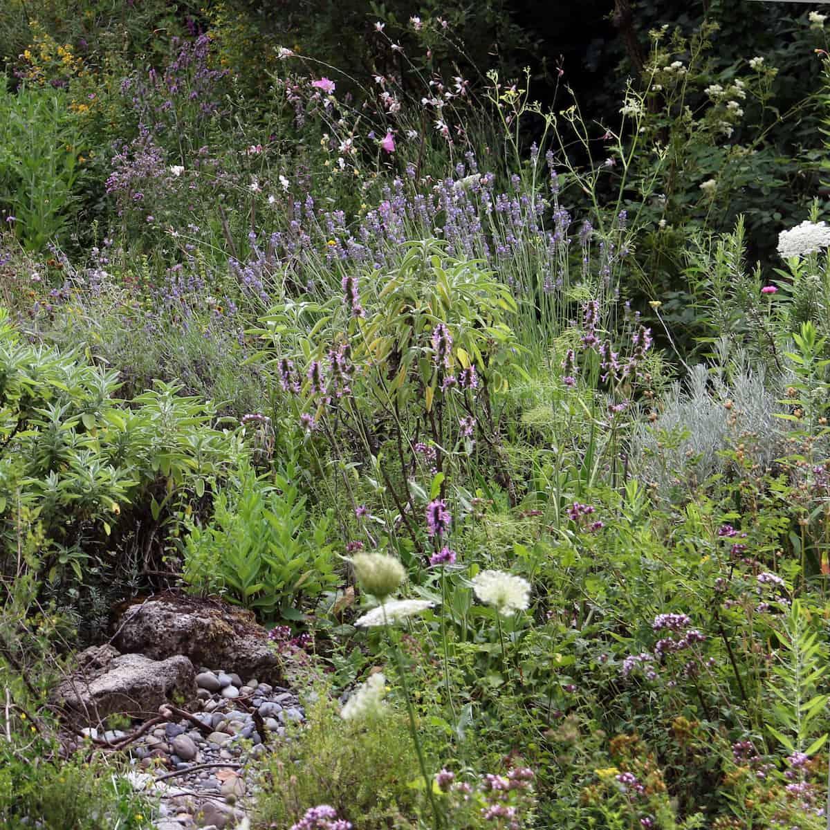 Naturgarten im Juli