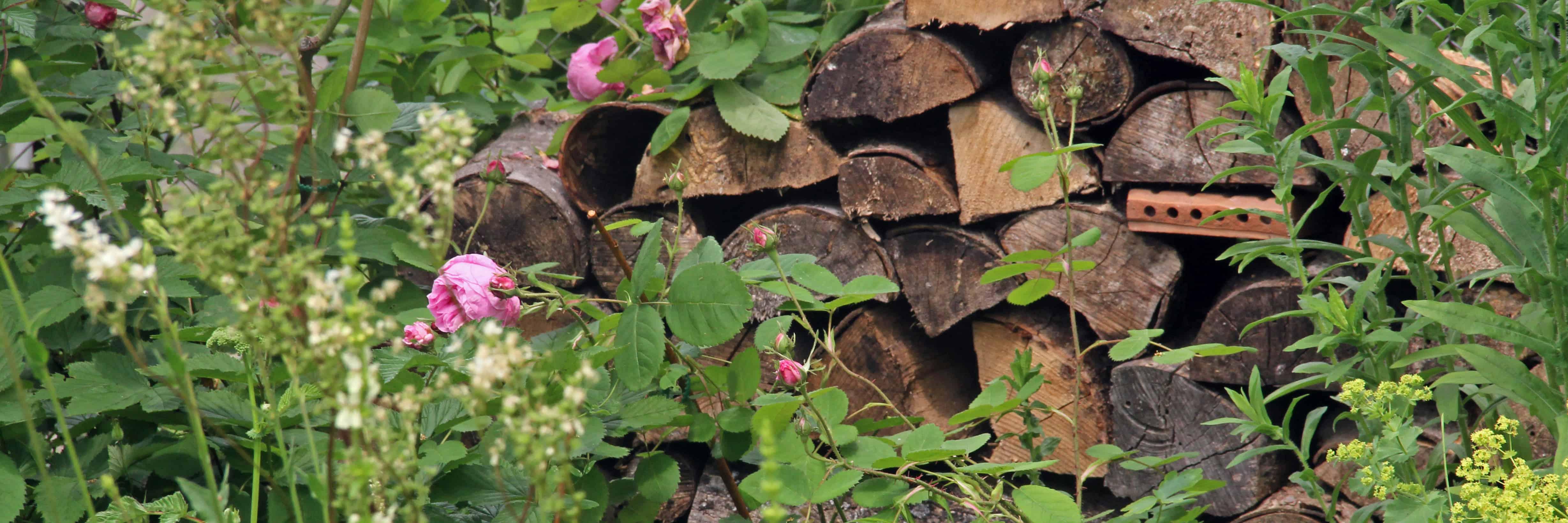 Foto1_Titelbild_3016-13Holzstapel_3-1_CDG Kopie