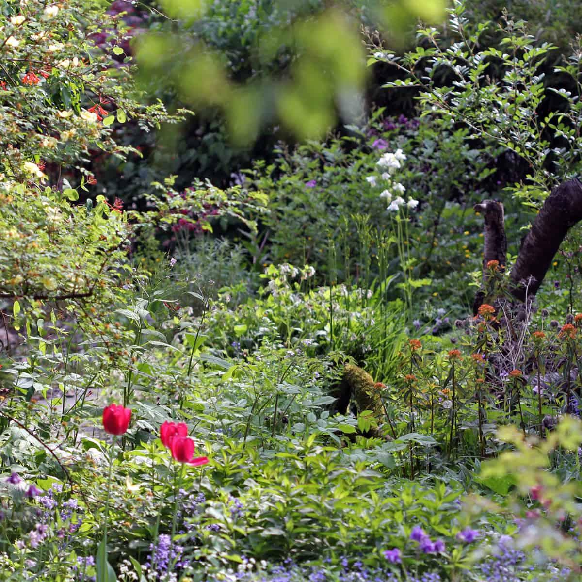 4671-15 Gartenansicht Spätfrühling CDG