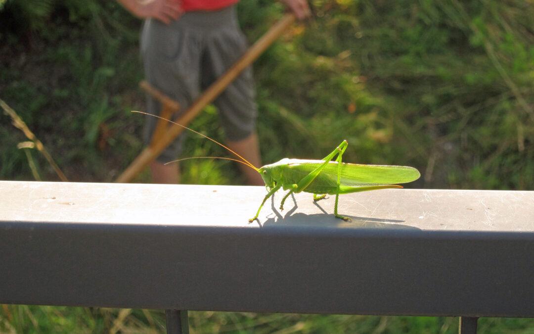 Insektenkalender