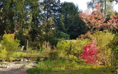 Regulas Trittsteingarten – Bericht 3