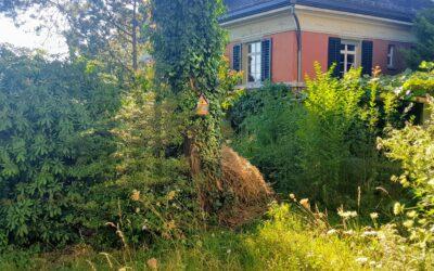 Regulas Trittsteingarten – Beitrag 8