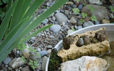 Regulas Trittsteingarten – Bericht 4