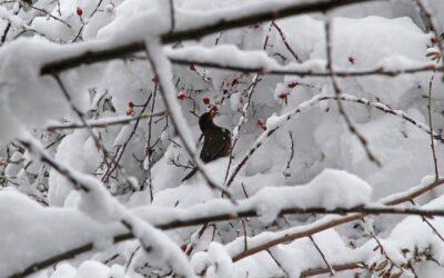 """Leserbriefe zu """"Gärten im Winter"""""""