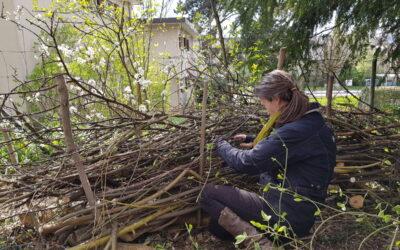Jasmins Trittsteingarten – Januar-April 2021
