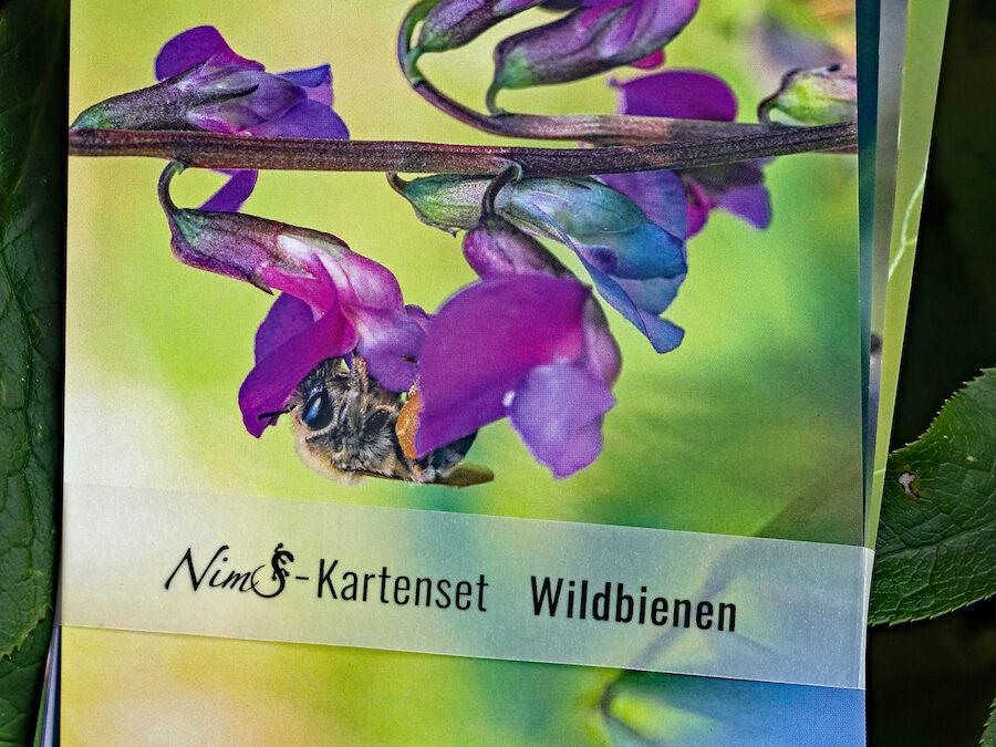 Neu: Das Wildbienen-Kartenset von NimS